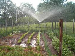 Sprinkler 3 foot tall Garden Lawn Sprinkler- WORKS LIKE RAIN