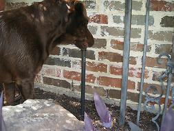 Sprinkler Riser Guard/Dog Protection